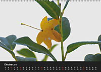 Laub und Blätter 2019 (Wandkalender 2019 DIN A2 quer) - Produktdetailbild 10