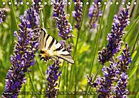 Lavendel. Der Duft der Provence (Tischkalender 2019 DIN A5 quer) - Produktdetailbild 6