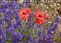 Lavendel. Der Duft der Provence (Tischkalender 2019 DIN A5 quer) - Produktdetailbild 4