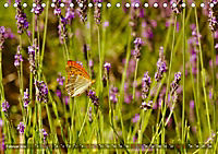 Lavendel. Der Duft der Provence (Tischkalender 2019 DIN A5 quer) - Produktdetailbild 2