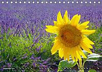 Lavendel. Der Duft der Provence (Tischkalender 2019 DIN A5 quer) - Produktdetailbild 9