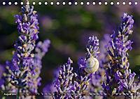 Lavendel. Der Duft der Provence (Tischkalender 2019 DIN A5 quer) - Produktdetailbild 8