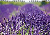 Lavendel. Der Duft der Provence (Tischkalender 2019 DIN A5 quer) - Produktdetailbild 11