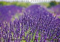 Lavendel. Der Duft der Provence (Wandkalender 2019 DIN A4 quer) - Produktdetailbild 10