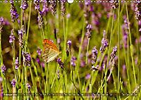 Lavendel. Der Duft der Provence (Wandkalender 2019 DIN A3 quer) - Produktdetailbild 2
