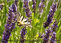 Lavendel. Der Duft der Provence (Wandkalender 2019 DIN A3 quer) - Produktdetailbild 6