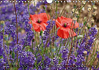 Lavendel. Der Duft der Provence (Wandkalender 2019 DIN A4 quer) - Produktdetailbild 4