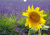 Lavendel. Der Duft der Provence (Wandkalender 2019 DIN A4 quer) - Produktdetailbild 9