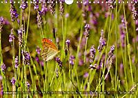 Lavendel. Der Duft der Provence (Wandkalender 2019 DIN A4 quer) - Produktdetailbild 2
