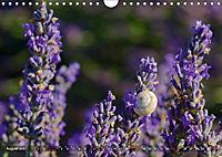 Lavendel. Der Duft der Provence (Wandkalender 2019 DIN A4 quer) - Produktdetailbild 8