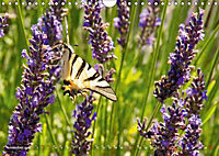 Lavender, the scent of Provence (Wall Calendar 2019 DIN A4 Landscape) - Produktdetailbild 11