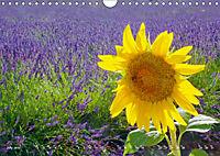 Lavender, the scent of Provence (Wall Calendar 2019 DIN A4 Landscape) - Produktdetailbild 7