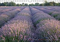 Lavender, the scent of Provence (Wall Calendar 2019 DIN A4 Landscape) - Produktdetailbild 4