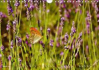 Lavender, the scent of Provence (Wall Calendar 2019 DIN A4 Landscape) - Produktdetailbild 3