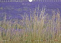 Lavender, the scent of Provence (Wall Calendar 2019 DIN A4 Landscape) - Produktdetailbild 9