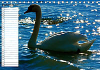 Lazise und Umgebung (Tischkalender 2019 DIN A5 quer) - Produktdetailbild 9