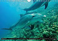 Leben in den Weltmeeren. Delfine, Wale und Haie (Wandkalender 2019 DIN A4 quer) - Produktdetailbild 1