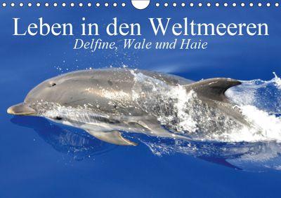 Leben in den Weltmeeren. Delfine, Wale und Haie (Wandkalender 2019 DIN A4 quer), Elisabeth Stanzer