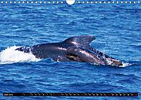 Leben in den Weltmeeren. Delfine, Wale und Haie (Wandkalender 2019 DIN A4 quer) - Produktdetailbild 6