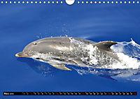 Leben in den Weltmeeren. Delfine, Wale und Haie (Wandkalender 2019 DIN A4 quer) - Produktdetailbild 3