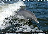 Leben in den Weltmeeren. Delfine, Wale und Haie (Wandkalender 2019 DIN A4 quer) - Produktdetailbild 9