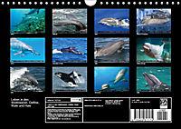 Leben in den Weltmeeren. Delfine, Wale und Haie (Wandkalender 2019 DIN A4 quer) - Produktdetailbild 13