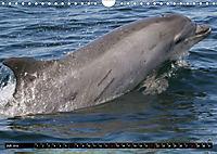 Leben in den Weltmeeren. Delfine, Wale und Haie (Wandkalender 2019 DIN A4 quer) - Produktdetailbild 7