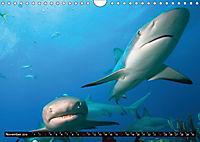 Leben in den Weltmeeren. Delfine, Wale und Haie (Wandkalender 2019 DIN A4 quer) - Produktdetailbild 11