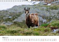 Leben in freier Natur - Wildtiere in natürlicher Umgebung (Wandkalender 2019 DIN A4 quer) - Produktdetailbild 3