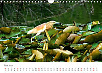 Leben in freier Natur - Wildtiere in natürlicher Umgebung (Wandkalender 2019 DIN A4 quer) - Produktdetailbild 5