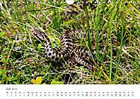 Leben in freier Natur - Wildtiere in natürlicher Umgebung (Wandkalender 2019 DIN A4 quer) - Produktdetailbild 7