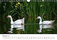 Leben in freier Natur - Wildtiere in natürlicher Umgebung (Wandkalender 2019 DIN A4 quer) - Produktdetailbild 2