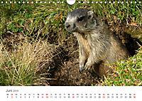 Leben in freier Natur - Wildtiere in natürlicher Umgebung (Wandkalender 2019 DIN A4 quer) - Produktdetailbild 6