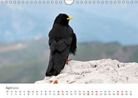 Leben in freier Natur - Wildtiere in natürlicher Umgebung (Wandkalender 2019 DIN A4 quer) - Produktdetailbild 4