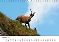 Leben in freier Natur - Wildtiere in natürlicher Umgebung (Wandkalender 2019 DIN A4 quer) - Produktdetailbild 10