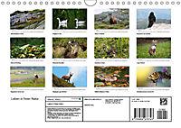 Leben in freier Natur - Wildtiere in natürlicher Umgebung (Wandkalender 2019 DIN A4 quer) - Produktdetailbild 13