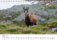 Leben in freier Natur - Wildtiere in natürlicher Umgebung (Tischkalender 2019 DIN A5 quer) - Produktdetailbild 3