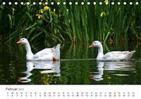 Leben in freier Natur - Wildtiere in natürlicher Umgebung (Tischkalender 2019 DIN A5 quer) - Produktdetailbild 2