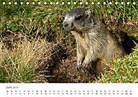 Leben in freier Natur - Wildtiere in natürlicher Umgebung (Tischkalender 2019 DIN A5 quer) - Produktdetailbild 6