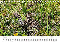Leben in freier Natur - Wildtiere in natürlicher Umgebung (Tischkalender 2019 DIN A5 quer) - Produktdetailbild 7