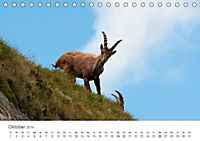 Leben in freier Natur - Wildtiere in natürlicher Umgebung (Tischkalender 2019 DIN A5 quer) - Produktdetailbild 10
