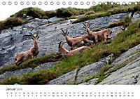 Leben in freier Natur - Wildtiere in natürlicher Umgebung (Tischkalender 2019 DIN A5 quer) - Produktdetailbild 1