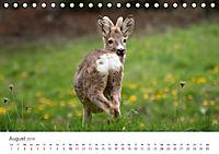 Leben in freier Natur - Wildtiere in natürlicher Umgebung (Tischkalender 2019 DIN A5 quer) - Produktdetailbild 8