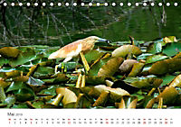Leben in freier Natur - Wildtiere in natürlicher Umgebung (Tischkalender 2019 DIN A5 quer) - Produktdetailbild 5