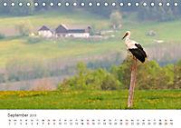 Leben in freier Natur - Wildtiere in natürlicher Umgebung (Tischkalender 2019 DIN A5 quer) - Produktdetailbild 9