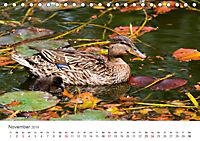 Leben in freier Natur - Wildtiere in natürlicher Umgebung (Tischkalender 2019 DIN A5 quer) - Produktdetailbild 11