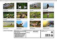 Leben in freier Natur - Wildtiere in natürlicher Umgebung (Wandkalender 2019 DIN A3 quer) - Produktdetailbild 13