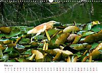 Leben in freier Natur - Wildtiere in natürlicher Umgebung (Wandkalender 2019 DIN A3 quer) - Produktdetailbild 5
