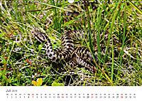 Leben in freier Natur - Wildtiere in natürlicher Umgebung (Wandkalender 2019 DIN A3 quer) - Produktdetailbild 7