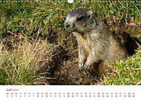 Leben in freier Natur - Wildtiere in natürlicher Umgebung (Wandkalender 2019 DIN A3 quer) - Produktdetailbild 6